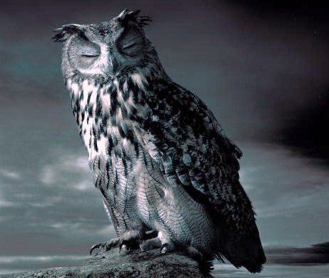 Wise old owl...