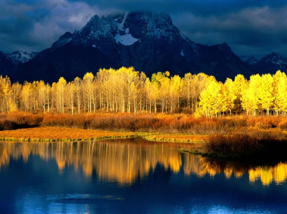 Quaking_Aspen,_Mount_Moran,_Grand_Tetons,_Wyoming