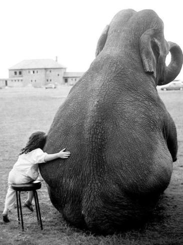 a girl and her elephant